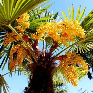 palmy portal1.jpg
