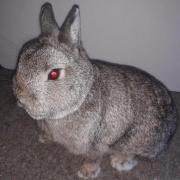 króliki pportal.jpg